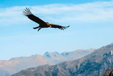 Arequipa, Colca Canyon, Puno, Uros, Taquile
