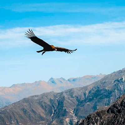 Arequipa, Colca Canyon, Puno, Uros, Taquile