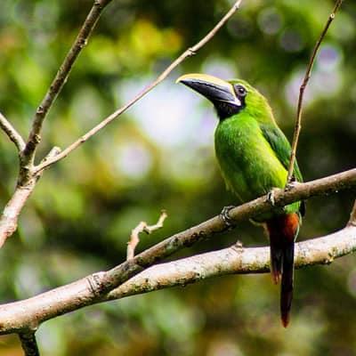 Wild Amazon Expedition Wasai Tambopata